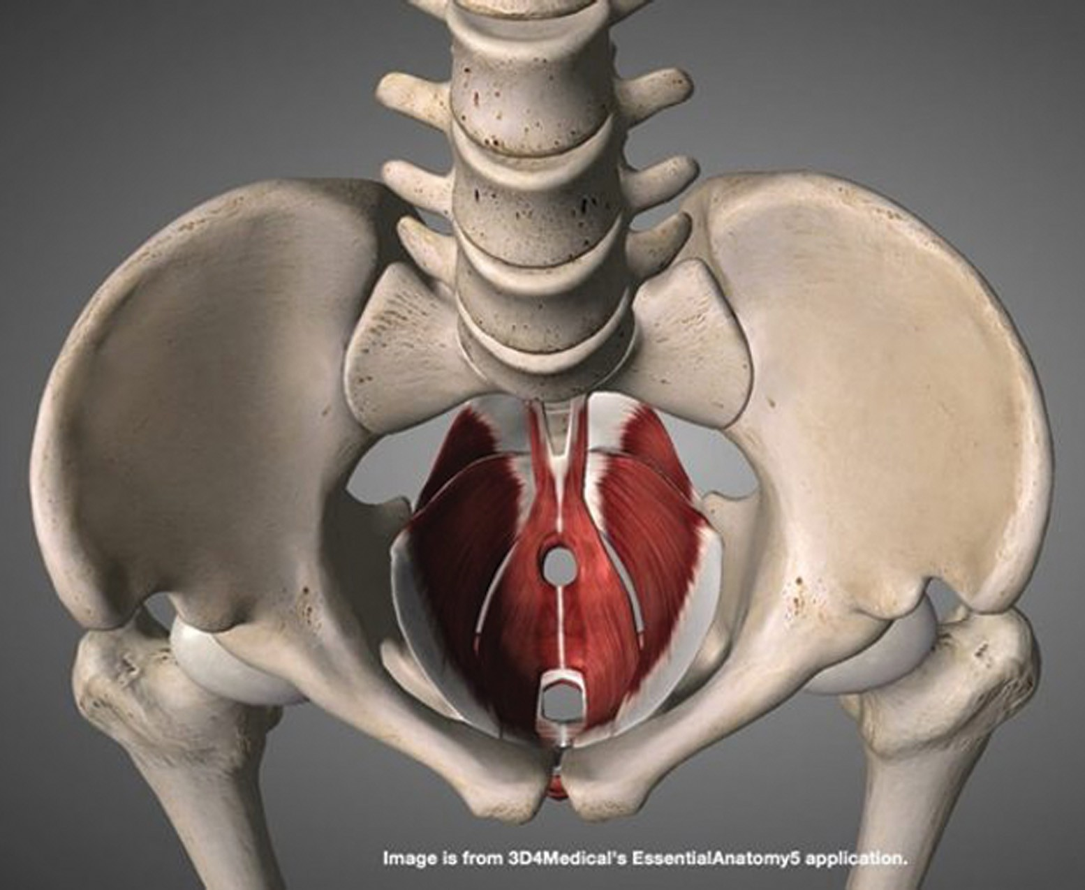 Photo of Do You Have A Weakened or Tight Pelvic Floor?