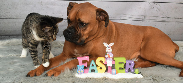 Photo of Easter Candy Can Pose Significant Health Issues For Pets
